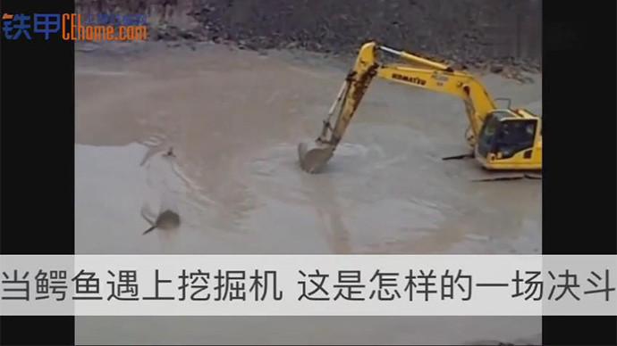 【甲友圈视频】挖机大战鳄鱼