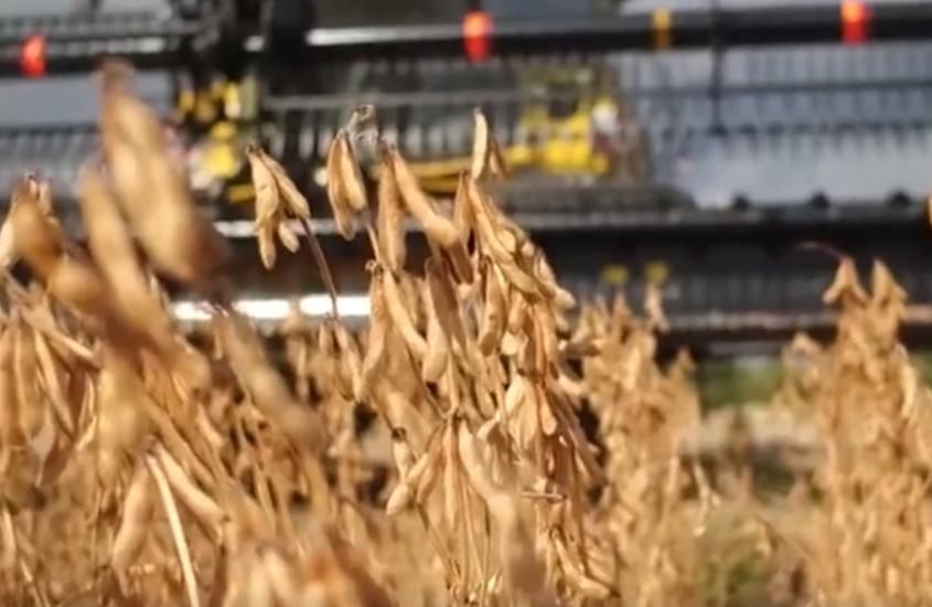 《超级工程》国外农场收割各种农作物,看这台大型收割机怎么收的