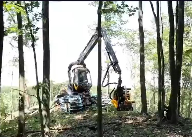 森林第一殺手! 超級伐木機,機械臂全能無死角。