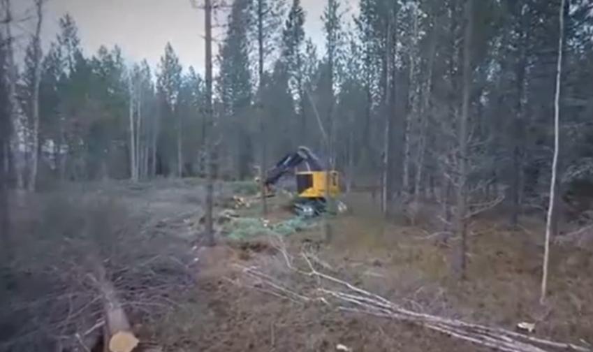 強大的伐木機械, 伐木剪枝切斷一氣呵成, 木材堆積如山!