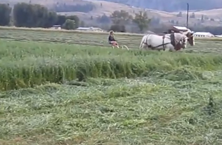 最古老的割草機械,用馬作為牽引動力,妹子一個人就能輕松駕馭