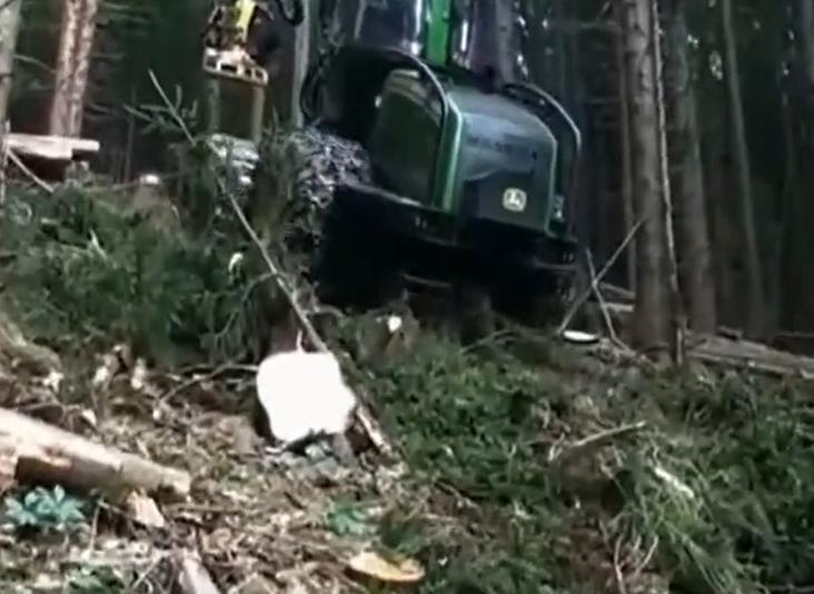 密林运输木材机械车,强大动力穿山越野国内难得一见