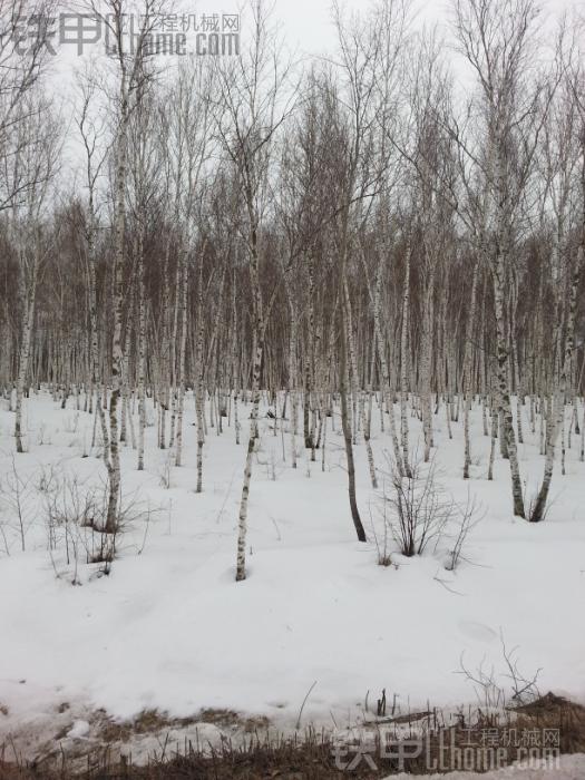 看看东北的天气,到现在雪不化,