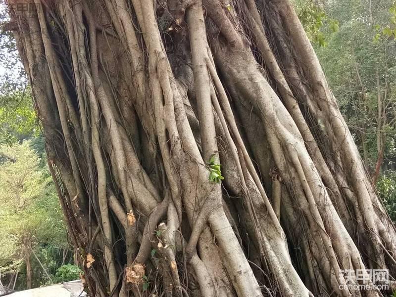 移树-帖子图片