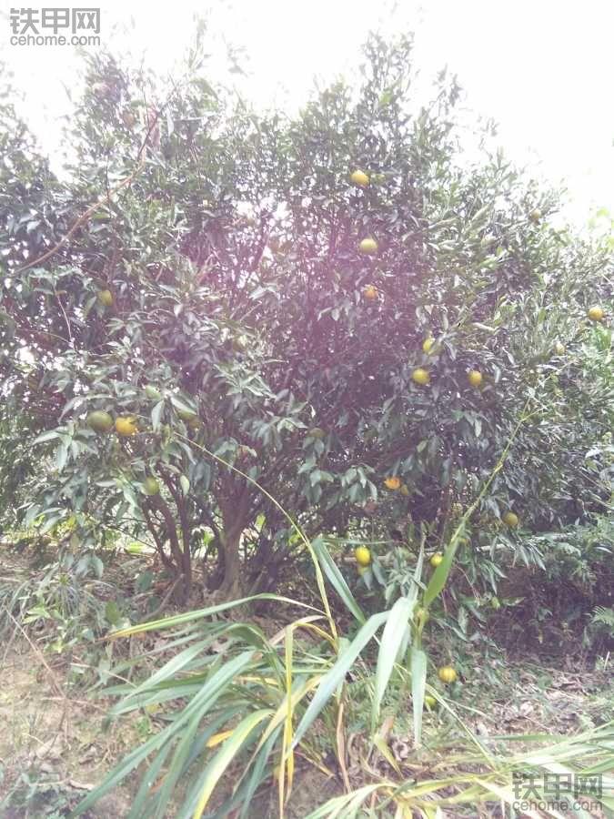 在农场干活就是好,各种水果任吃,香蕉,芭乐,柚子,桔子,