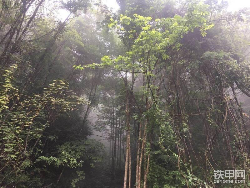我在原始森林里开了2个月挖机 没有信号没有4G