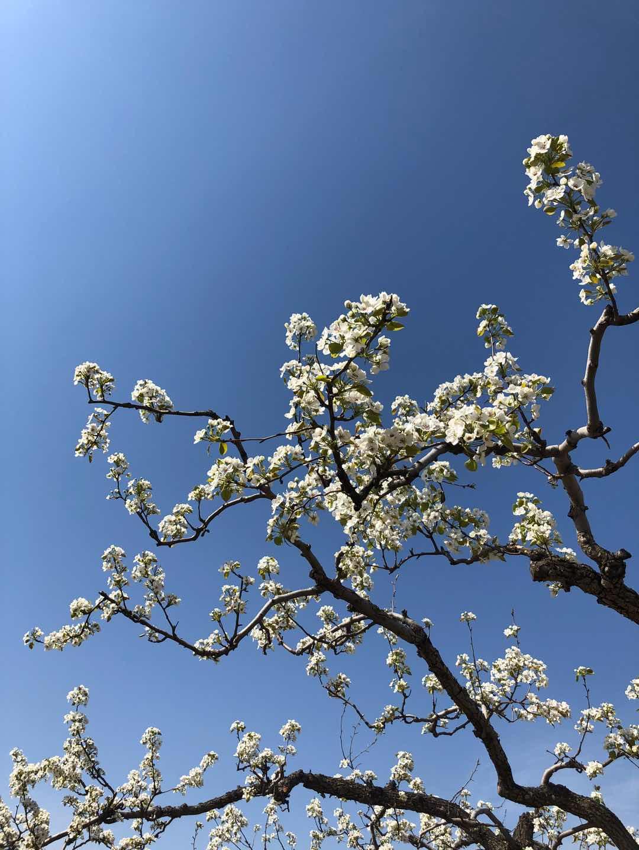 春天的模样,美得无以言表