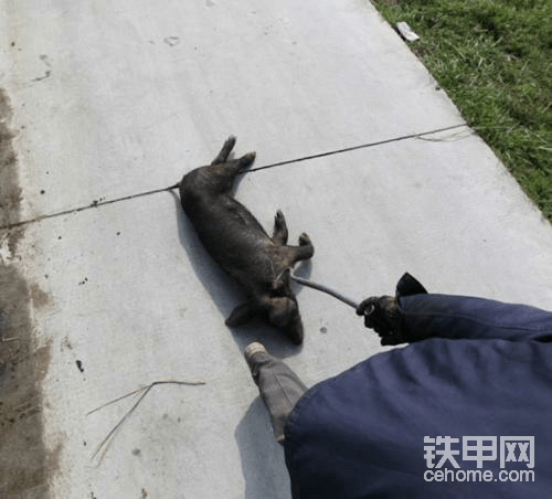 【印象最深的施工事故】农村电网改造,发生了意外!
