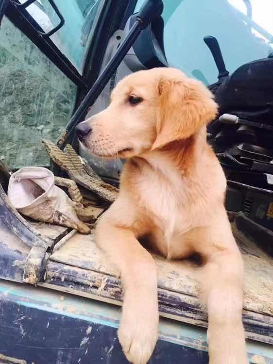 挖掘机上的单身狗