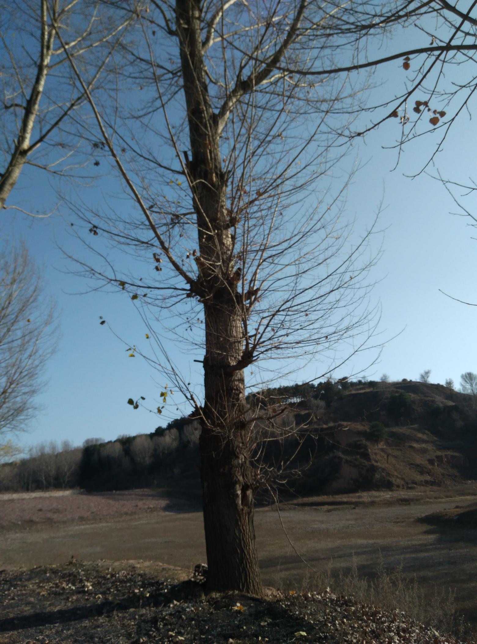 大树与水库