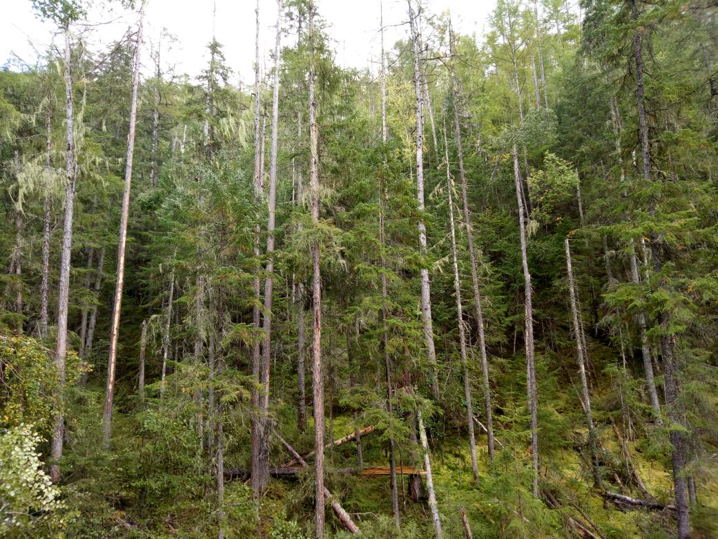 【金猪送福】【俄罗斯行纪】十一,森林之歌