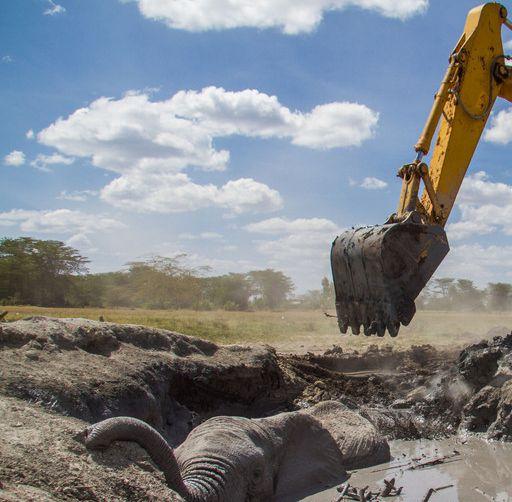 挖机救大象,你见过没?