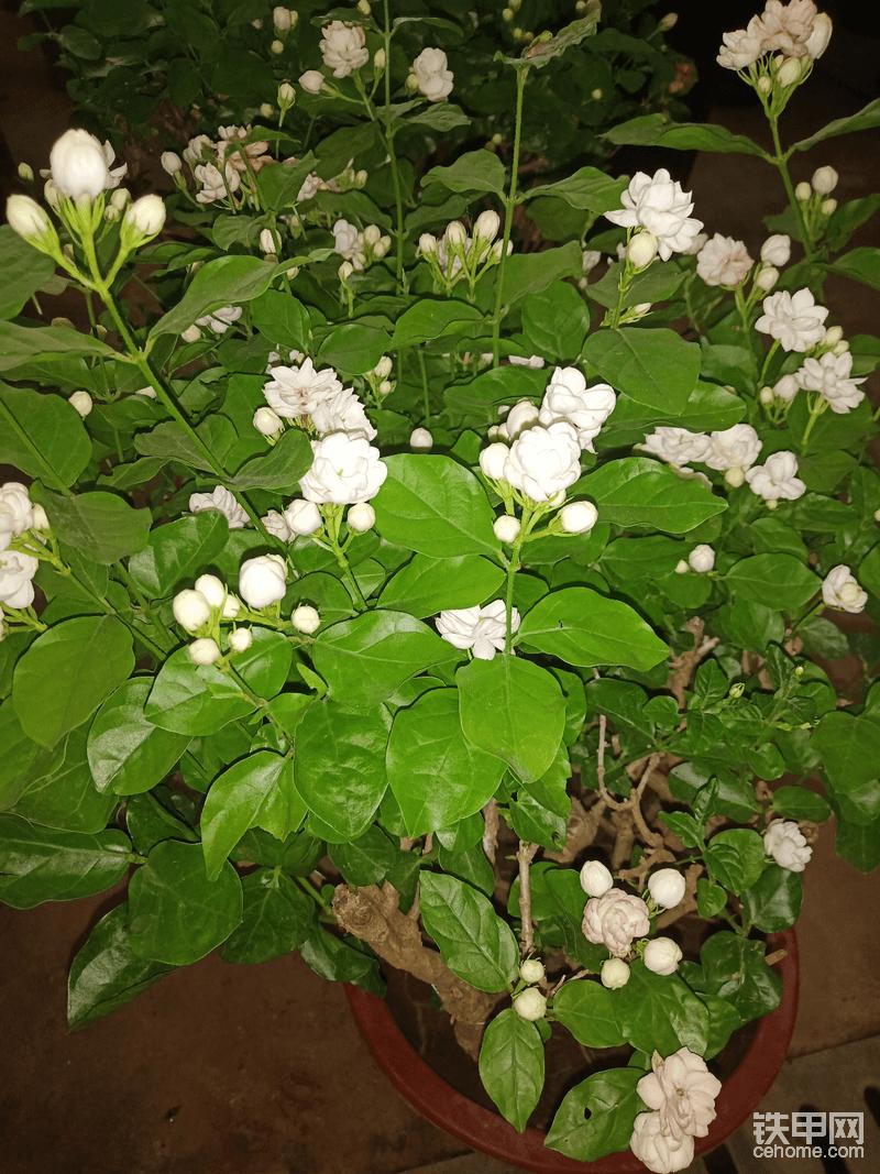花市-帖子圖片