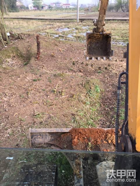 挖竹根-帖子圖片